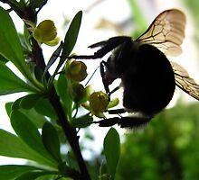 hello mr. bee by greycat