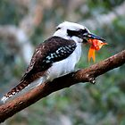 The Kookaburra Thief by byronbackyard