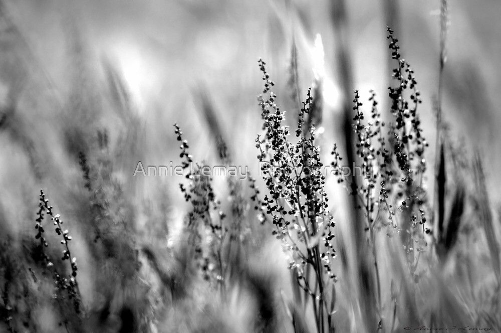 Free as the Wind  by Annie Lemay  Photography