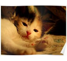 You looking at me? I know Im gorgeous!  Poster