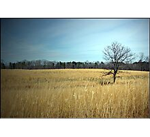 Golden Fields Photographic Print