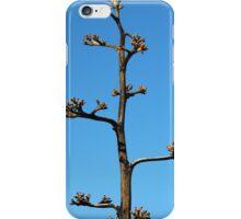 Century Plant Agave. Chiricahua Mountains, Arizona, USA. iPhone Case/Skin