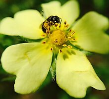 Bee's Yellow Delight by Colette22
