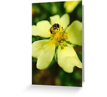 Bee's Yellow Delight Greeting Card