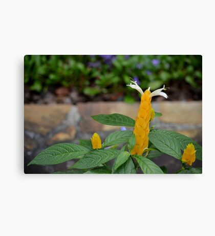 Golden Shrimp Plant Trio Canvas Print