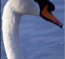 Swan Profile by Lauren Neely
