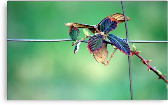 Tangled Vibrance by Lauren Neely