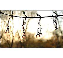 Aglow Photographic Print