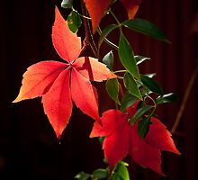 Signs of Autumn by Keith Irving