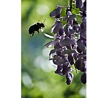 checking out the wisteria Photographic Print