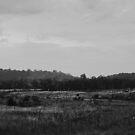Remote land by Pirostitch
