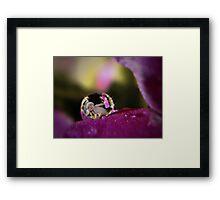 Primrose Baby Dew Drop Framed Print