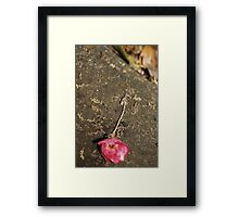 Another Point of View Framed Print