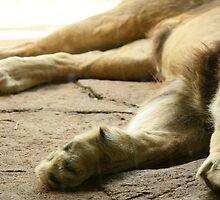 BIG Paws by adellecousins