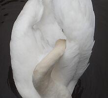 Swan Lake by Sandra Cockayne