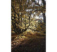 Sunlight shining Photographic Print