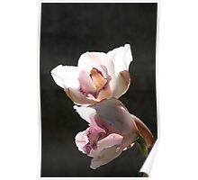 White flower 5929 Poster