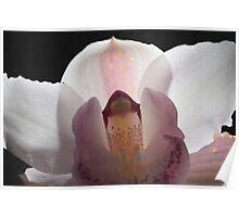 White flower 5968 Poster