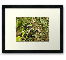 Blue Spotted Dragons Do Exist! Framed Print