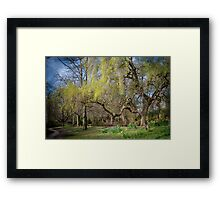 Weeping Willow in Spring Framed Print