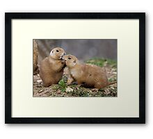 Kiss me Quick! (Black-Tailed Prairie Dogs) Framed Print