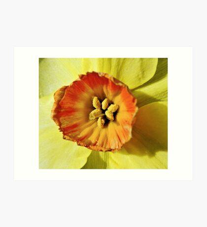 Daffodil macro Art Print