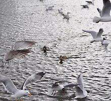 Gulls Galore by Shubd