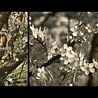 Plum Blossoms (Art Prints) by SleepySmile