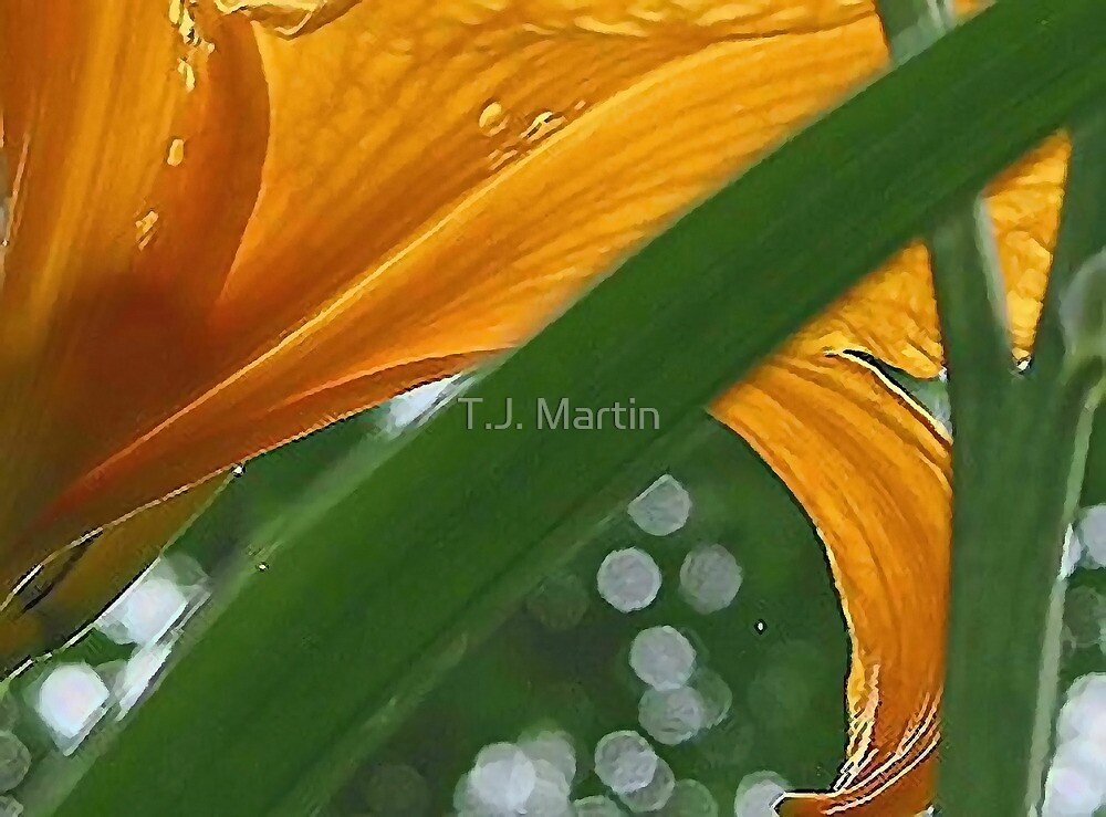 Lily with Raindrops - Bridgton,  Maine by T.J. Martin
