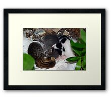 Street Kittens Framed Print