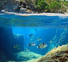 Mediterranean cove and rocky seabed with fish underwater by Seaphotoart
