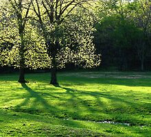 Spring Tree Lights by NatureGreeting Cards ©ccwri