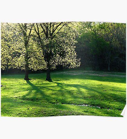 Spring Tree Lights Poster