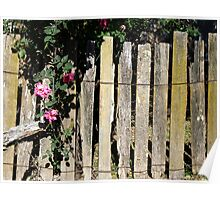 Rambling Rose- Hill End Poster
