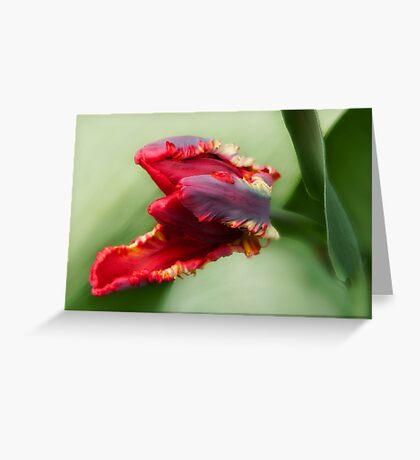 Awaken -Tulip Greeting Card