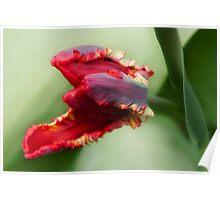 Awaken -Tulip Poster