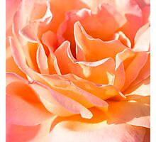 Nested Petals Photographic Print