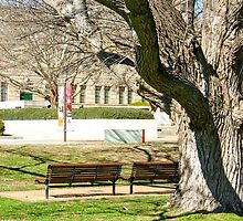Vacant Bench Seats by eidann
