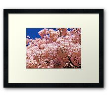 Blossom Tree Close-Up,  Framed Print