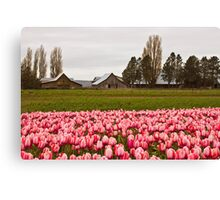 Barns near Tulip Town, Skagit Valley Canvas Print