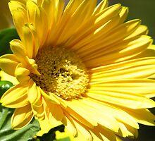 Oh ta be a Daisy by kimbarose