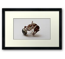 The World of Very Small Things Framed Print