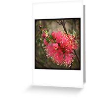 Kalbarri Wildflower Greeting Card