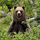 Boo Sits - Kicking Horse Grizzly Bear Refuge by JamesA1