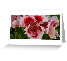 Geranium Macro 1 Greeting Card