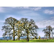 Resting Under The Oak Trees Photographic Print