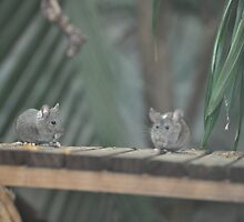 You Eat Like a Mouse by Krystal Iaeger