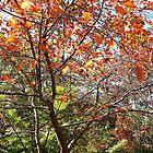 Red Leaves at Tamborine Botanical Gardens by Virginia McGowan
