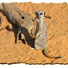 Merely a Meercat by Elaine Game