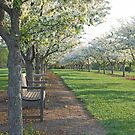 The Grove at Cox Park by mwfoster